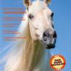 """Titelbild """"Reiter und Pferd in Balance: Die Gewichtshilfen"""