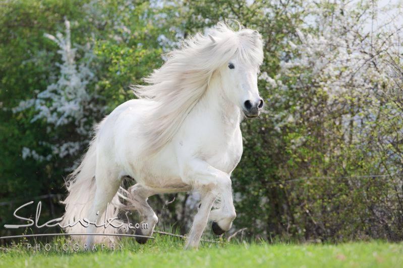 Die Skala der Ausbildung kann bei allen Pferderassen angewendet werden. Foto: www.slawik.com