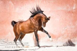 chrissie_stallion