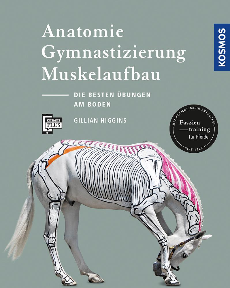 Anatomie, Gymnastizierung Muskelaufbau: Übungen am Boden | Dressur ...