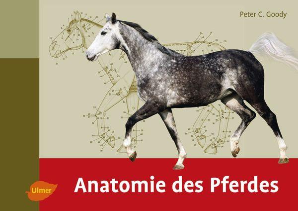 Peter C. Goody: Anatomie des Pferdes | Dressur-Studien