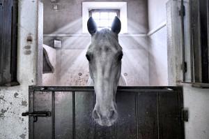 """Das Foto """"Angel Horse"""" von Filipa Scarpa hat den FEI-Fotowettbewerb gewonnen."""