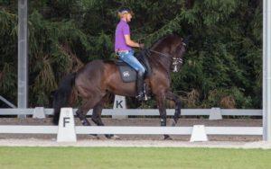 Und tatsächlich: Ein Pferdekopf lässt sich so eng an den Hals ziehen. Edward Gal, Glocks Undercover. Foto: Friederike Fründ