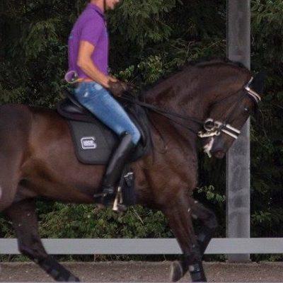 """Der Kopf bis auf die Brust gezogen, die Reiterhände nach hinten gepresst: Glocks Undercover wird """"trainiert""""... Foto: friederike Fründ"""