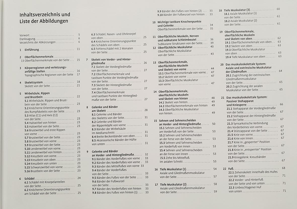 Berühmt In Der Anatomie Oberflächlich Galerie - Physiologie Von ...