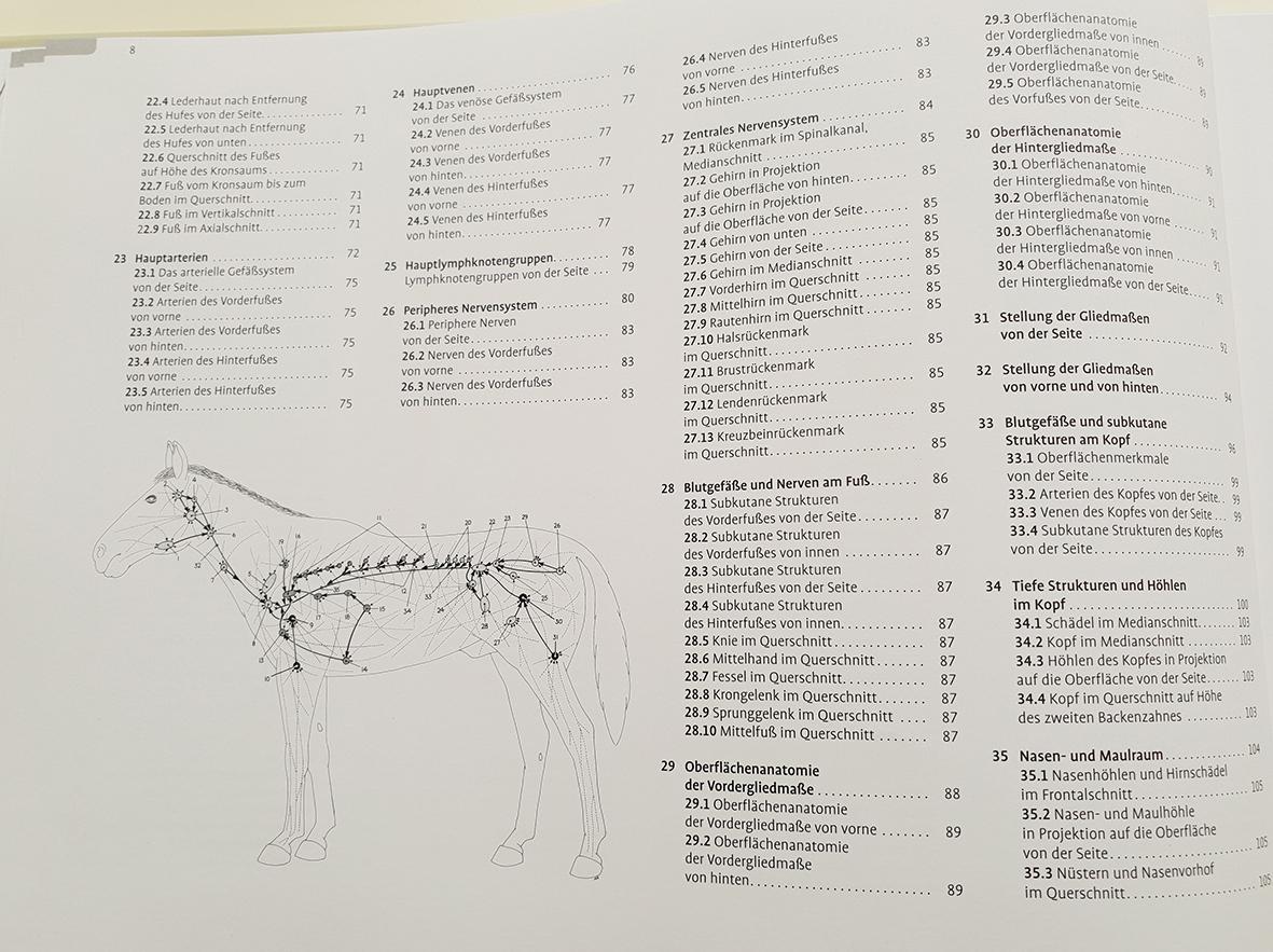Fantastisch Oberflächenanatomie Brust Ideen - Menschliche Anatomie ...