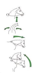 """Abbildung 1: Schulung des Pferdes in Bezug auf die Reiterhand, von oben nach unten: Nachgeben im Unterkiefer (""""cession de mâchoire""""), seitliche Biegungen, Dehnungshaltung,  Genickbeugung in hoher Aufrichtung."""
