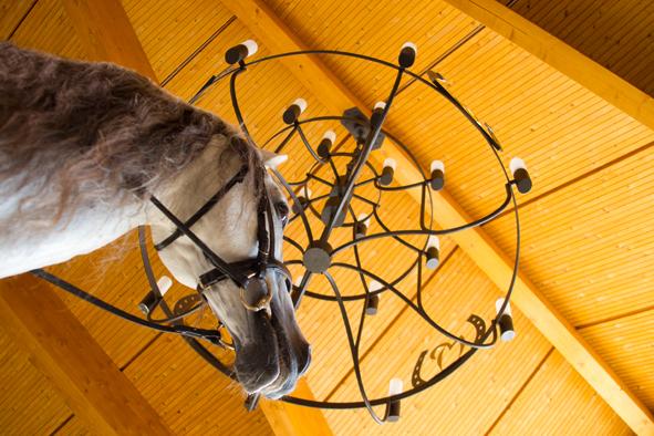 Auch die schönste Halle taugt nichts, wenn das Pferd nicht regelmäßig ausgeritten wird. Foto: www.slawik.com