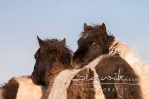 Foto: www.slawik.com
